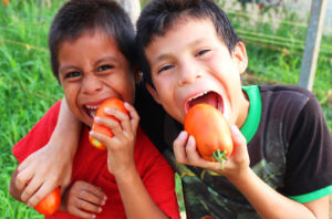 Boys eating tomatoes fresh from the NPH farm
