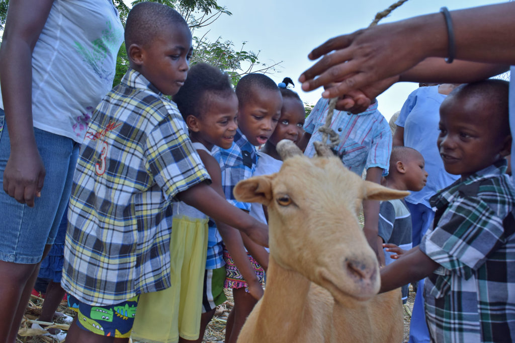 Children visiting farm